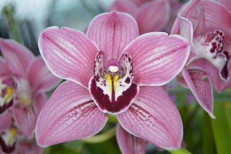 orchid-1199809_960_720.jpg